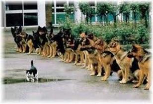 Discipline_4